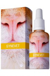 Energy Gynevet