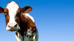 Kravské colostrum | 100% nastartuje vaši imunitu | AlfaFit
