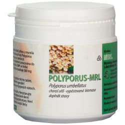 MRL Polyporus umbellatus ─ Choroš oříš ─ prášek 250 g