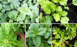 Účinné bylinky na hubnutí - 100% zrychlí metabolismus - 223197 - Bylinky na hubnutí - magazín