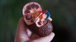 Babské rady na ledvinové kameny - 6 tipů, jak se jich zbavit přírodní cestou