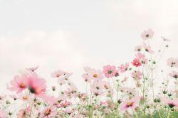 Bylinky na jarní únavu: 15+ bylinek na boj s jarní únavou