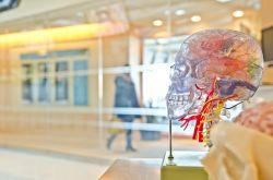 Potraviny pro mozek - pro jeho výkon a regeneraci